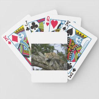 Baralhos Para Poker Gato selvagem animal do safari de África da árvore