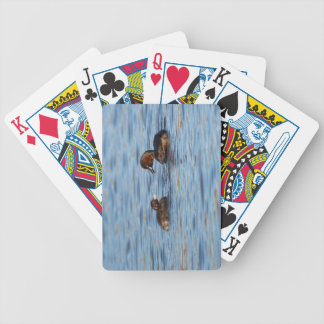 Baralhos Para Poker Grebe pequeno e pintinho