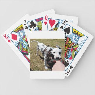 Baralhos Para Poker Kevin o Dalmatian