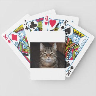 Baralhos Para Pôquer gato