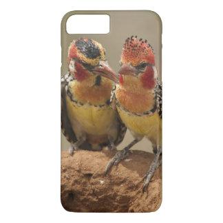 Barbet vermelho e amarelo que come térmitas capa iPhone 7 plus