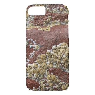 Barnacle & capas de iphone cor-de-rosa do limpet