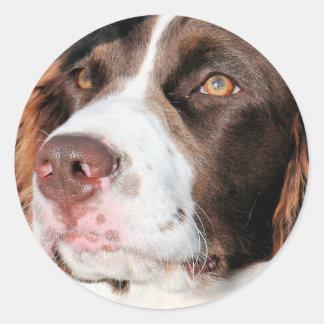 Baxter - Spaniel de Springer inglês Photo-06 Adesivo