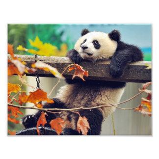 Bebê da panda gigante sobre a árvore impressão de foto