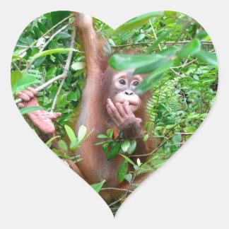 Bebê do orangotango na selva de Bornéu Adesivo Coração