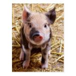 Bebês bonitos do Barnyard dos animais de fazenda d Cartão Postal