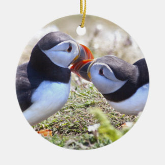 Beijando o ornamento dos papagaio-do-mar