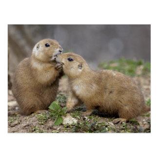 Beije-me cartão rápido