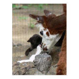 Beijos do gatinho para o cartão da alpaca