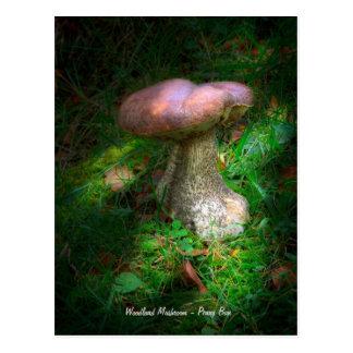Belas artes, cogumelo da floresta - bolo da moeda cartão postal