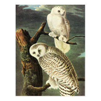 Belas artes das corujas de John James Audubon Cartão Postal