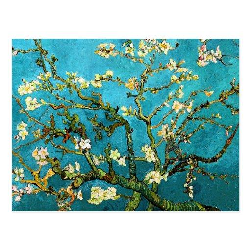Belas artes de florescência da árvore de amêndoa d cartão postal