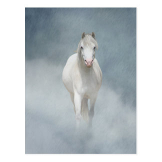 beleza branca cartão postal