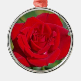 Beleza da rosa vermelha ornamento de metal