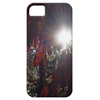 Beleza no Sumac Capa Barely There Para iPhone 5