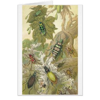 Besouros britânicos cartão