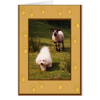 Bichon Frise e cartão do cordeiro