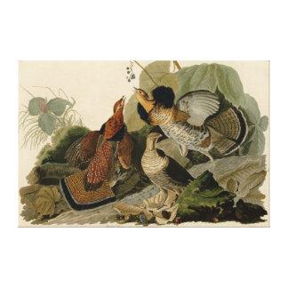 Bird, America, Ruffed Grouse, Audubon, Canvas