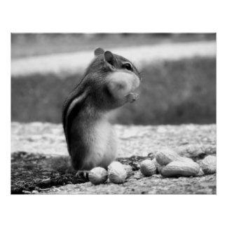 Black&white do Chipmunk - impressão