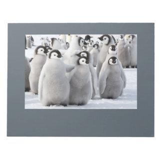Bloco De Anotação Almofada de nota dos pintinhos do pinguim de