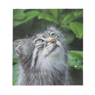 Bloco De Anotação pallas-gato
