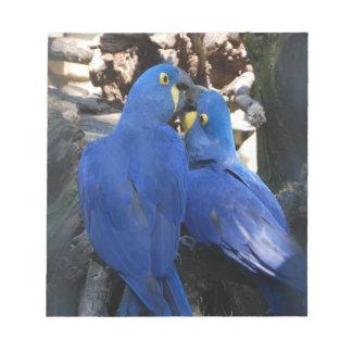 Bloco de notas dos papagaios