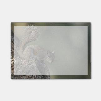 Bloco De Notas Esquilo de cinzas orientais, ou esquilo cinzento