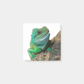 Bloco De Notas Iguana verde