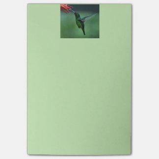 Bloco De Notas Notas de post-it do colibri