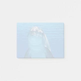 Bloco De Notas O golfinho de Bottlenose olha a câmera sob a água