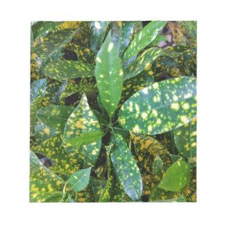 Bloco De Notas Planta do Croton