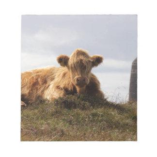 Bloco De Notas Vaca de Luing na ilha de Islay, Scotland