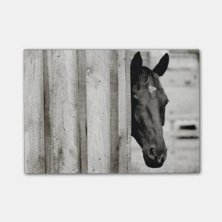 Bloco Post-it Cavalo preto curioso