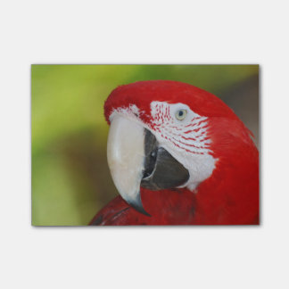 Bloco Post-it Escarlate bonito do Macaw