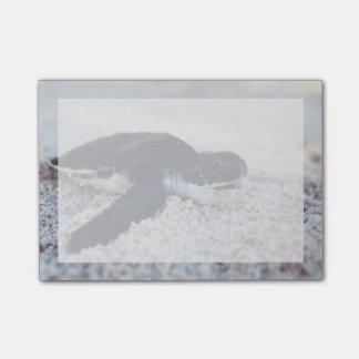 Bloco Post-it Fim-Acima dos hatchings 1 da tartaruga de mar