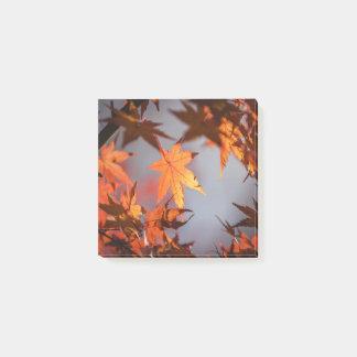 Bloco Post-it País das maravilhas da queda da cor do outono