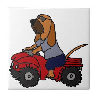 Bloodhound engraçado que conduz ATV vermelho Azulejo