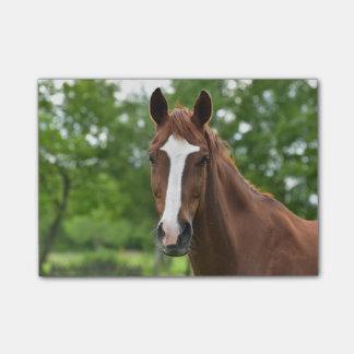 Bloquinho De Notas Cara do cavalo com marcação