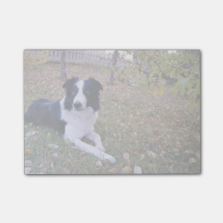 Bloquinho De Notas O cão temático, border collie encontra-se na jarda