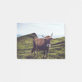 Bloquinho De Notas Vaca bovina na paisagem bonita
