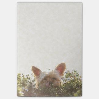 Bloquinho De Notas Yorkshire terrier que coloca em Sun que lambe os