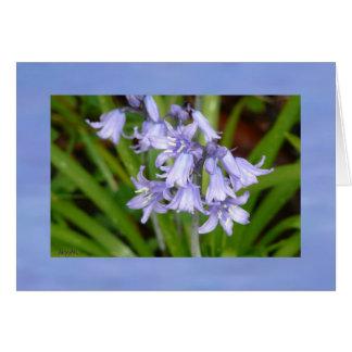 Bluebells do primavera cartão