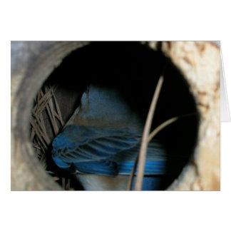 Bluebird Cartão Comemorativo