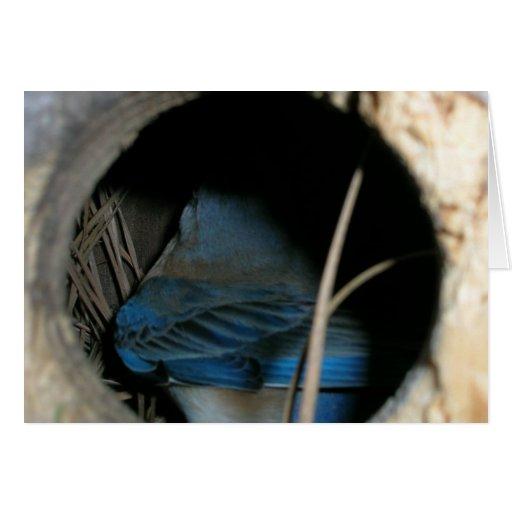 Bluebird Cartão