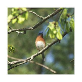 Bluebird, cópia das canvas