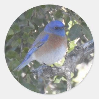 Bluebird da montanha adesivo redondo