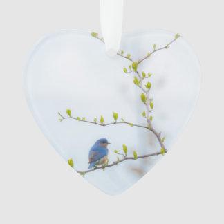 Bluebird oriental do pássaro animal ornamento