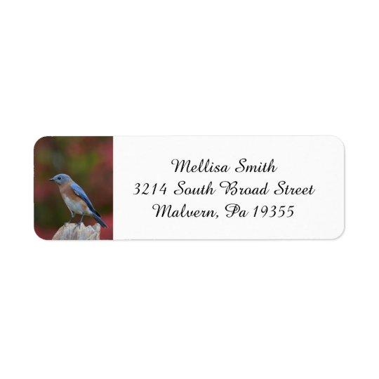 Bluebird oriental excitante etiqueta endereço de retorno
