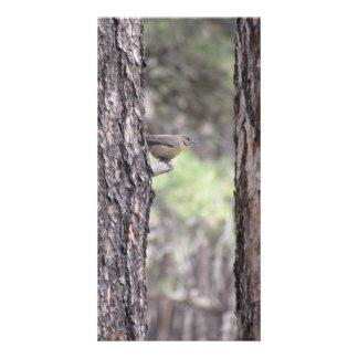 Bluebird que descansa no membro de árvore cartão com foto