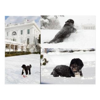 """BO """"o cão da família de Obama"""" no cartão da neve"""